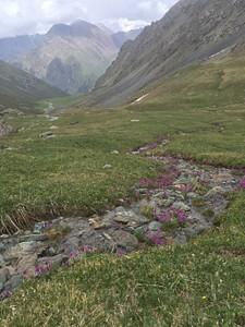 כר דשא פרחוני בירידה מפאס טלטי