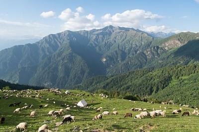 צ'יקלאני - האוהלים שלנו מוקפים בעדר כבשים