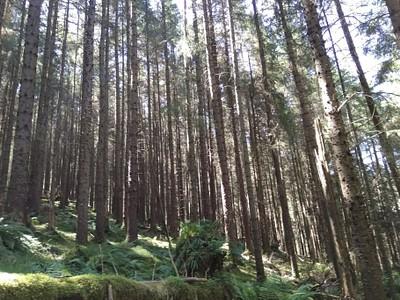 יער יער!