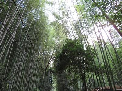 יער הבמבוק ב- Arashiyama