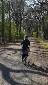 שביל האופניים עובר ביער ירוק ויפיפה