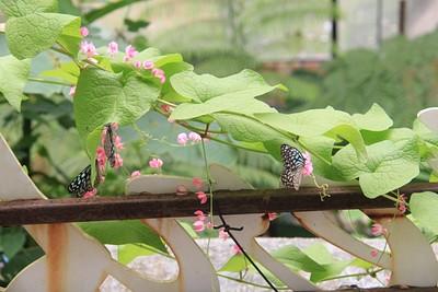 בגן הפרפרים