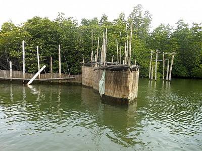 מכלאות לגידול צדפות בנהר המאודו