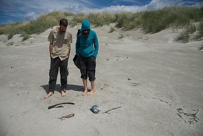 פינגווין מת על החוף