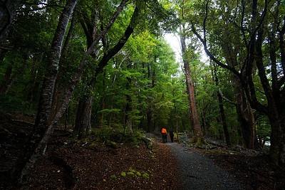 ההליכה ביער