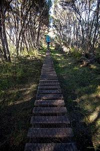 בדרך למייסון ביי - בחלקים הבוציים ממש יש דקים נוחים להליכה