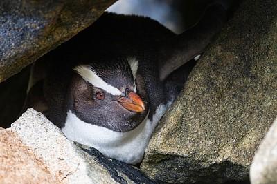 פינגווין חמוד שהופיעה כמה מטרים מאיתנו בזמן שניסינו לדוג