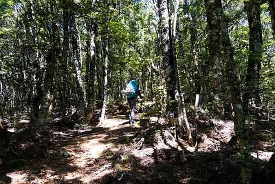 העליה ביער - תלולה אבל נוחה