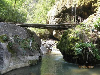 גשרון עץ
