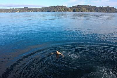 המים מדהימים! שימו לב שיש באיזורים מסוימים כרישים לבנים שמחפשים גורי כלבי ים...