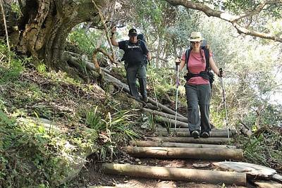 מתחילים את המסע. מדרגות העץ מופיעות בכל המסלול