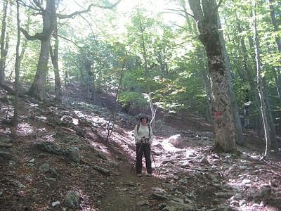 היער בו ירדנו מההר