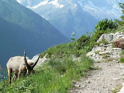ההליכה לכיוון Lac Blanc #2