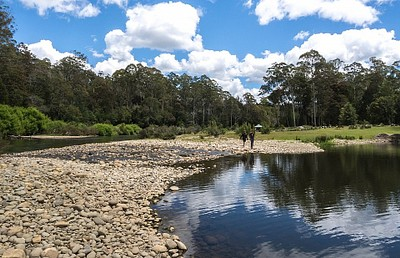 Warrawee Forest Reserve.
