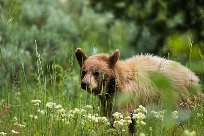 אותו דוב נחמדשאפשר לנו לצפות בו משחק עם גזע עץ במשך רבע שעה