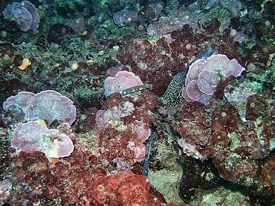 מורנה מציצה מבעד הסלעים, צבעים רבים מלווים את התמונות