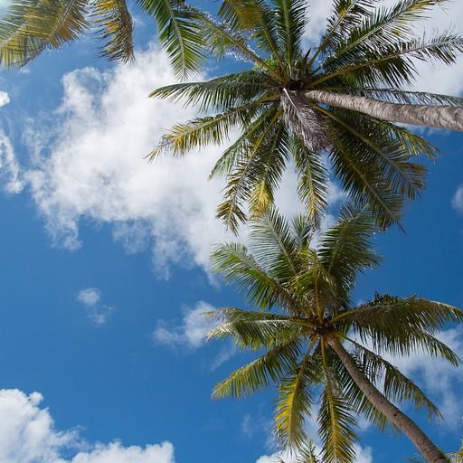 האי פו-קווק