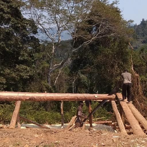 חוטבי עצים