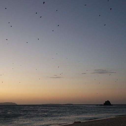 כל ערב ב18:0 כשמחשיך עטלפי הפירות עפים יחד אל עבר האיים ממול, מחזה מרהיב ויפייפה, Club Paradise Resort