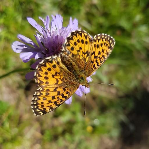 שפע של פרפרים ופריחה