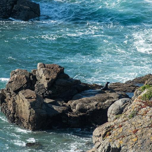 כלב ים שעלה על סלע