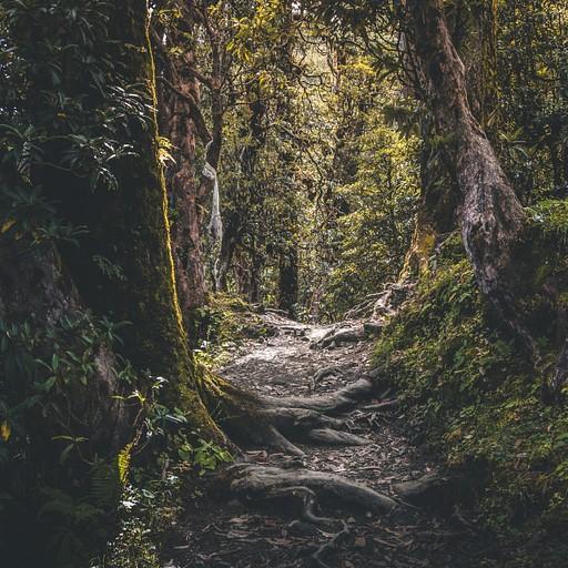 היער המוביל לגנדרוק