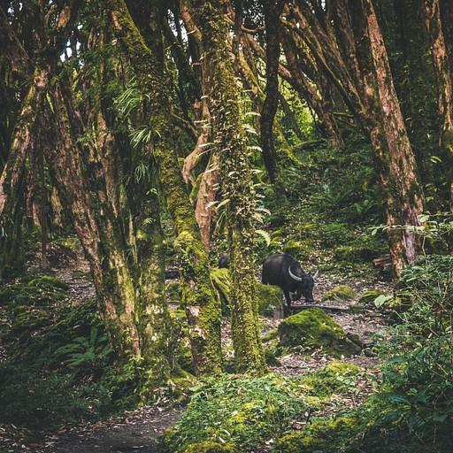 לא לבד ביער