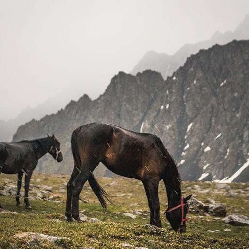 מזג האוויר מתחיל להתדרדר. לא נראה שלסוסים האלו זה מפריע במיוחד
