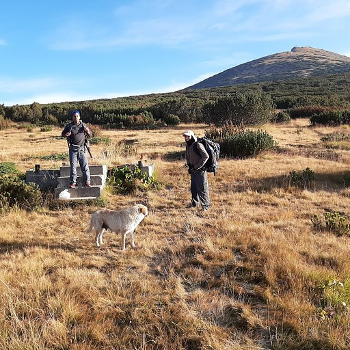 הצומת לאחר היציאה מהעמק, רגע לפני העלייה לרכס ההרים של מוסלה בליווי כלבה מקומית