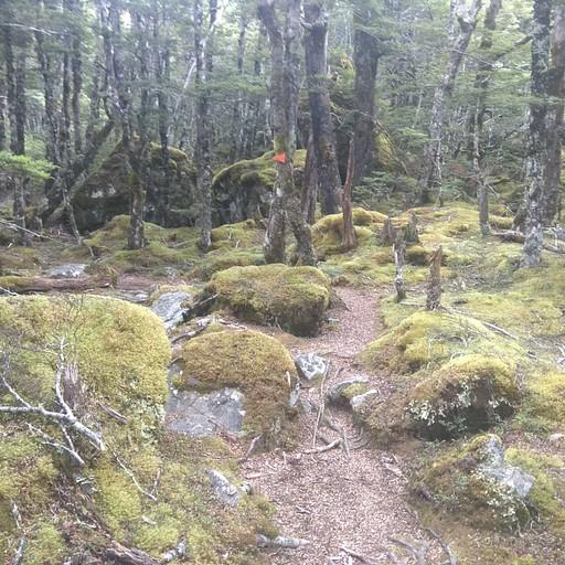 תצפו להרבה הליכה ביער
