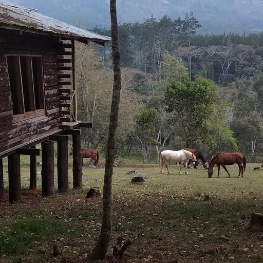 trot farm- המקום בו ישנו