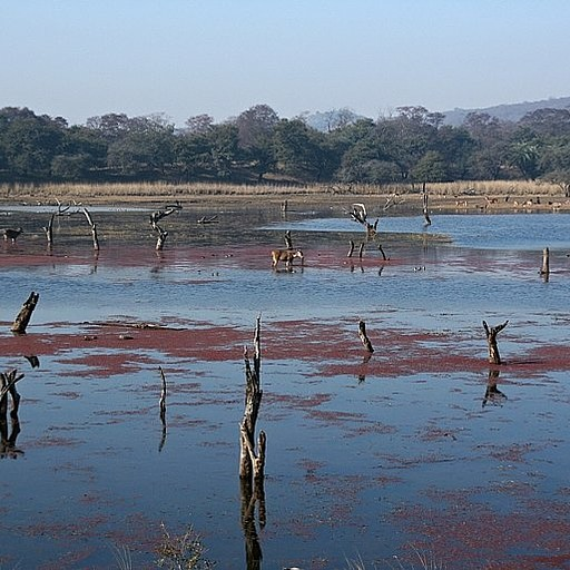 נוף הביצות ברהנטמבור