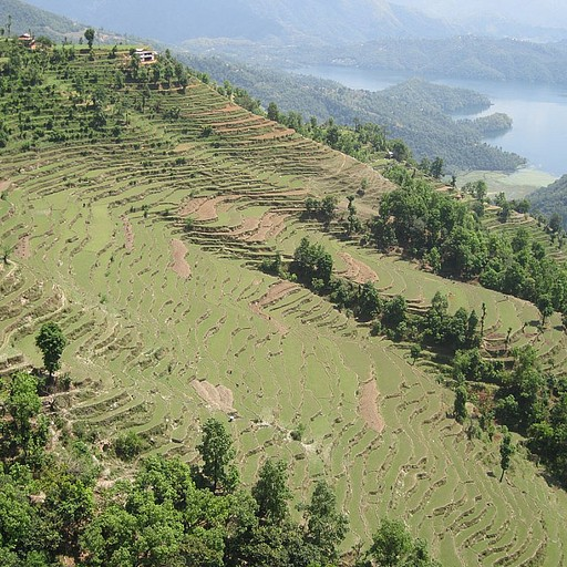 שדות אורז וברקע האגם