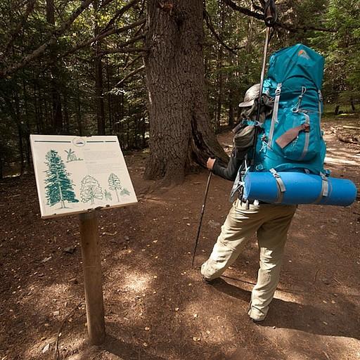 לאורך השביל ביער הציבו שלטים עם הסברים על החיי והצומח באיזור