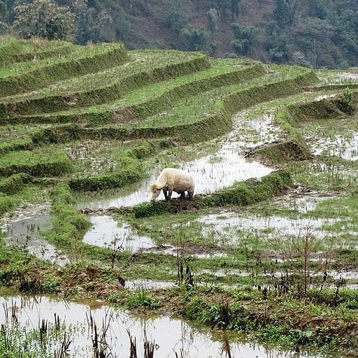 נוף טרסות האורז מדהים