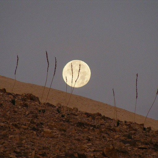 זריחת ירח מהחניון