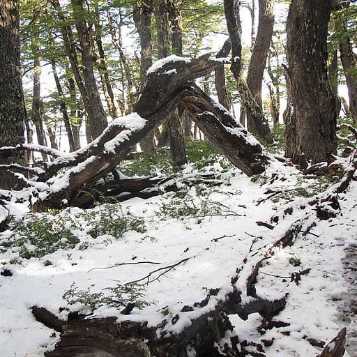 תחילת היום הראשון -  הליכה ביער