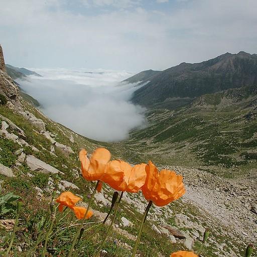ערפל כבד בעמק