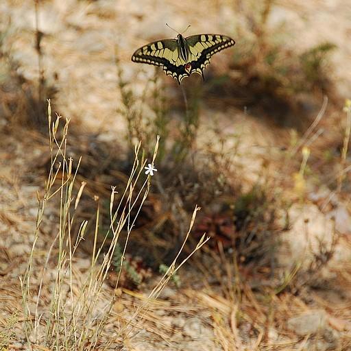 אחד מהמוני הפרפרים שמעופפים להם בטרק