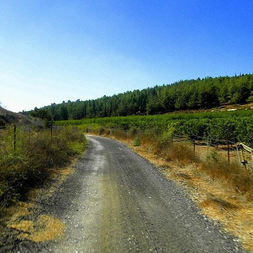 (רוכבים דרומה לבת שלמה דרך שבילי עפר החוצים פרדסים ומטעים השייכים למושב).