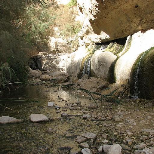 בריכות מים צוננות בנחל ערוגות