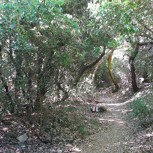 הליכה בחורש ים תיכוני 'צפוף' בנחל נריה