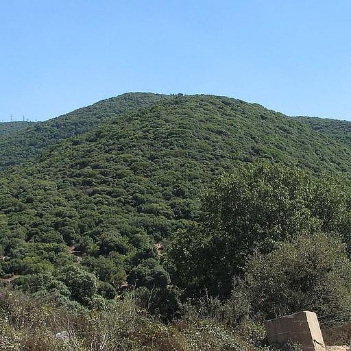 הר מירון