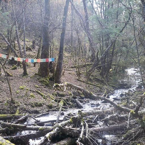 סימון שבילים ביער