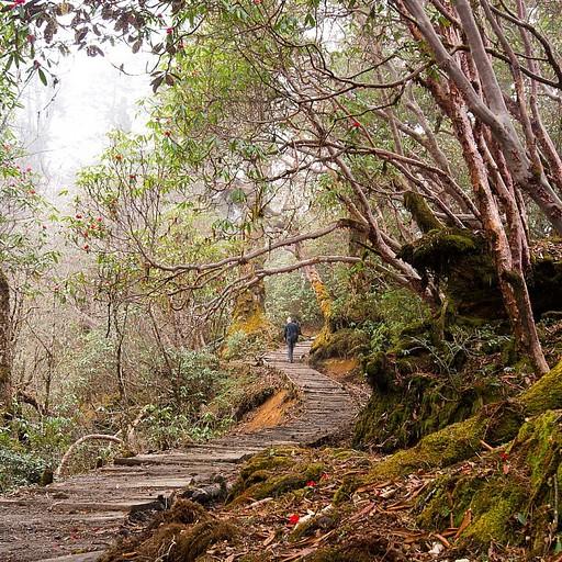 הדרך מ- Tshoka מסודרת ונוחה וההליכה על שביל עץ