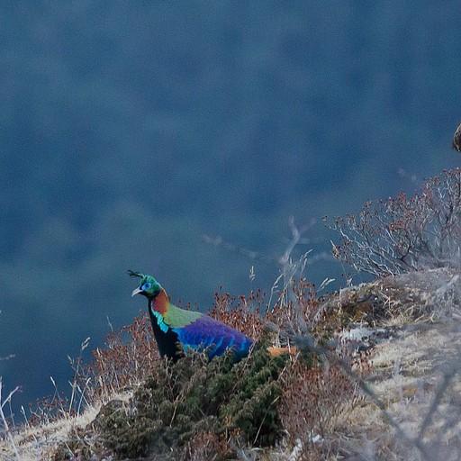 ציפור מדהימה (סוג של פסיון) בקרבת הבקתה