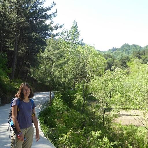 השביל אל הכניסה ליער (לפני החץ הלבן שמאלה)