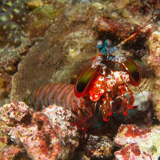 Mantis Shrim