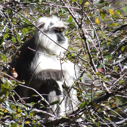 אחד מהקופים באיזור שהצלחנו לתפוס.