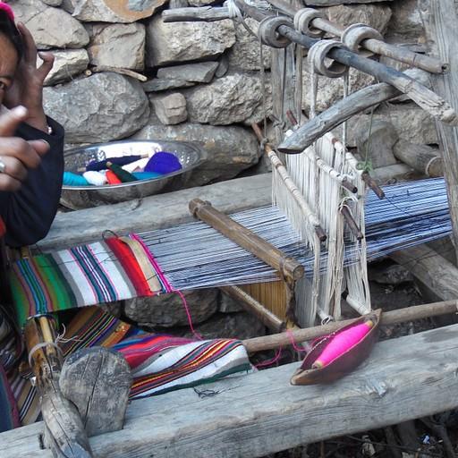 נפאילת מבוגרת טווה בנול עתיק